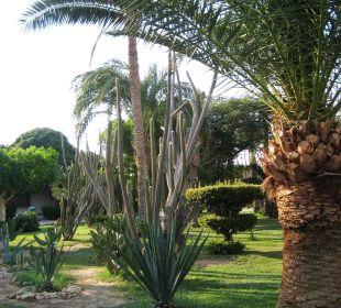 Alles sehr gepflegt und schön angelegt Hotel Shams Safaga