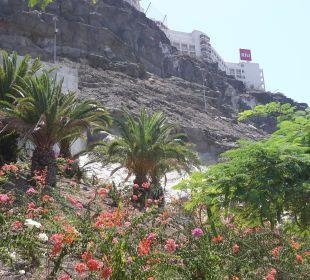 Blick zum Hotel vom Stand aus ClubHotel Riu Vistamar
