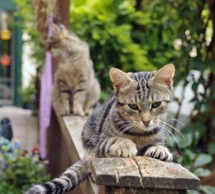 Eine unserer Katzen in der Sonne Ferienhof Eulennest