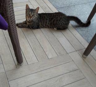 Katze im Restaurant Außenbereich Sensimar Belek Resort & Spa