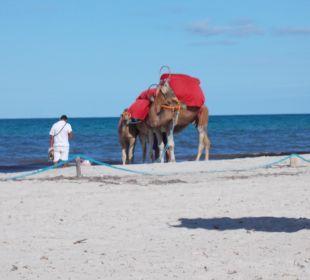 Kamel SunConnect Djerba Aqua Resort