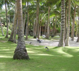 Top Hotelstrand Henann Resort
