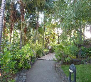 Tolle Pflanzen Hotel Hacienda San Jorge
