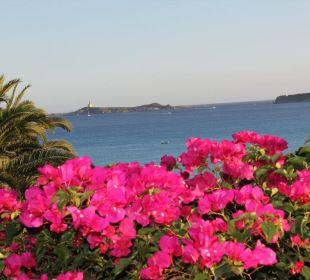 Schön gepflegter Garten mit Blick aufs Meer Hotel Residence Fenicia