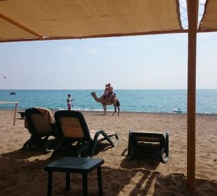 Hoteleigener Strand Sherwood Dreams Resort