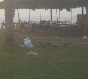 Reste der Besucher Hotel Flamingo Beach Resort
