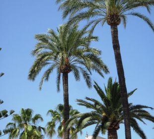 Zusätzliche Schattenspender SENTIDO Playa del Moro