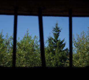 Blick aus Hochlohturm Pension Rehblick