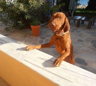 Die stürmische junge Rosa, aber ganz lieb ! Hotel Possidona Beach