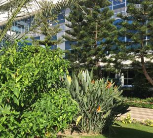 Pflanzen  Hotel Concorde De Luxe Resort