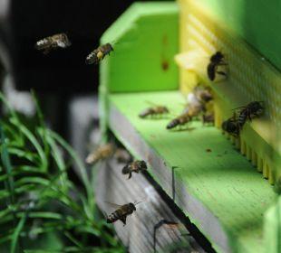 Bienen und Mensch - Naturverbundenheit Ferienwohnungen Theresienhof