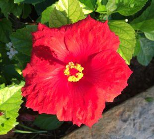 Gartenanlage  COOEE Cala Llenya Resort Ibiza