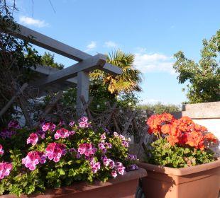 Außenansicht Bed & Breakfast Trullo Casa Rosa