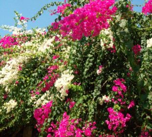 Blumengruß Patra Bali