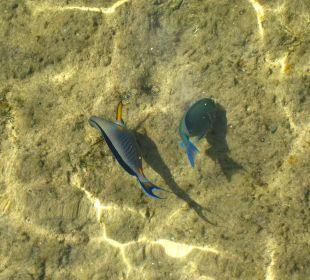 Fische vom Steg aus