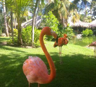 Flamingos Hotel Natura Park Resort & Spa