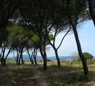 Pinienwald vor dem Strand Sardafit Ferienhaus Budoni