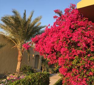 Beautiful garden Three Corners Fayrouz Plaza Beach Resort