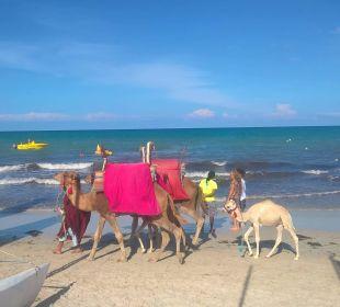 Dromedar am Strand nähe Wassersportstation TUI MAGIC LIFE Penelope Beach