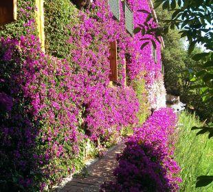 Gartenanlage Hotel L'Olivara Villaggio