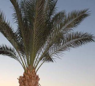 Palme Stella Di Mare Beach Resort & Spa Makadi Bay