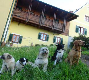 Ob groß ob klein - jeder brave Hund darf rein  Landhaus FühlDichWohl