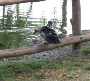 Neu angelegter Teich