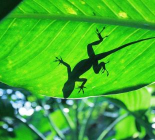 Lizard vor dem Gästezimmer. Guest House Green Garden House