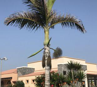 Gartenanlage Hotel Luz Del Mar