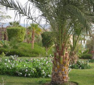 Ausblick Three Corners Fayrouz Plaza Beach Resort