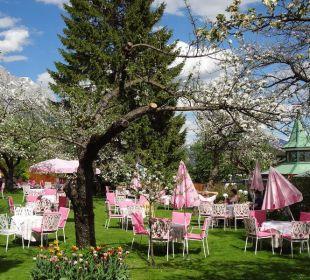 Weissrosa tafeln unter blühenden Apfelbäumen. Alpenresort Schwarz