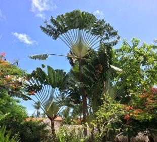 Gartenanlage Hotel Natura Park Beach Eco Resort & Spa