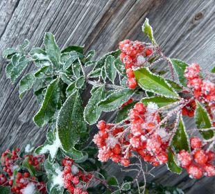 Gartensträucher in herrlicher Winterpracht Ferienwohnungen Berghof Kinker