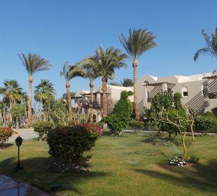 Palmen überall Hotel Iberotel Makadi Beach