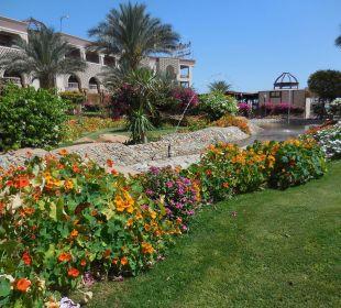 Sehr schöner Gartenbereich