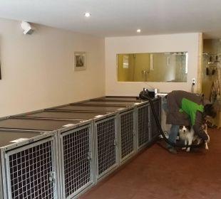 Abschließbare Hundeboxen, hinten Hunde-Föhn Hotel Grimming