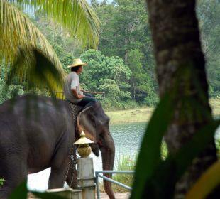 Elefanten vor der Terrasse Lake View Bungalows