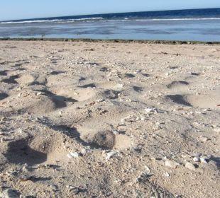 Der Strand besteht aus vielen Muschelsegmenten