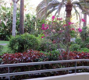 In den Garten. IFA Catarina Hotel