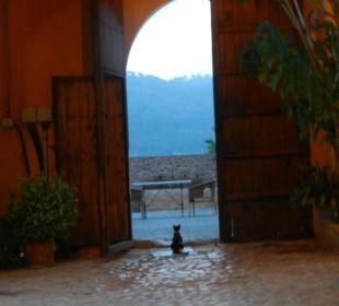 Vom Innenhof nach draußen zum Brunenn Finca Son Esteve