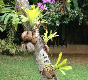 Traumhafter Garten Amal Villa