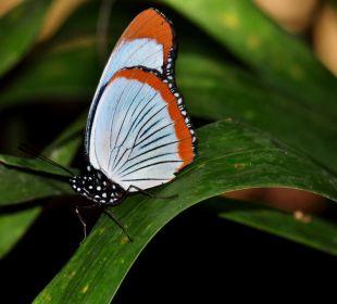 Schmetterling im Morgengrauen