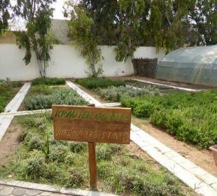 Kräutergarten verwahrlost TUI MAGIC LIFE Penelope Beach