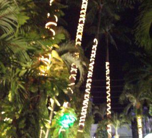 Palmenbeleuchtung K Hotel