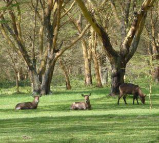 Tierbeobachtungen im Garten