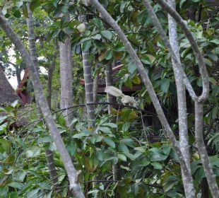 Tiere im Dschungel