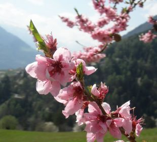 Blüte im April Hotel Zirmerhof