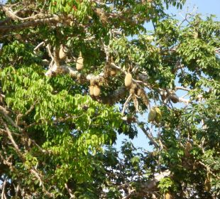 Ein Baum Hotel Diani Sea Lodge