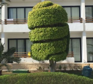 Gepflegte Bäume