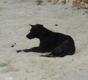 Hotelhund Six Senses Samui Resort & Spa